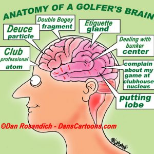 anatomy of a golfer's brain